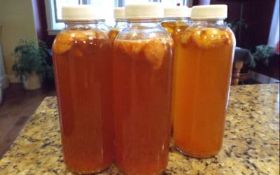Best Bottles for Flavoring and Storing  Kombucha