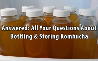 Answered: All Your Questions About Bottling & Storing Kombucha