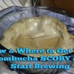 SCOBY resources--How and Where to Get Your Kombucha SCOBY and Start Brewing