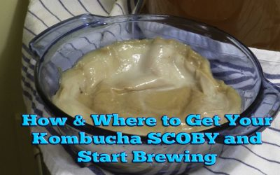 SCOBY resources–How and Where to Get Your Kombucha SCOBY and Start Brewing