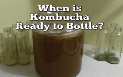 How To Know When Home Brewed Kombucha is Ready to Bottle